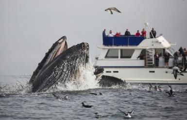 Whale Watching Near Monterey - Chase Dekker Wild-Life Images / Getty Images