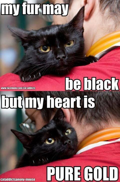Black Cats-- I love black and black cats are not only gorgeous, they are the sweetest kitties too.