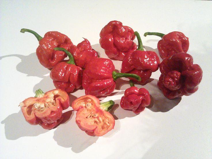 Reddest hottest chili pepper!