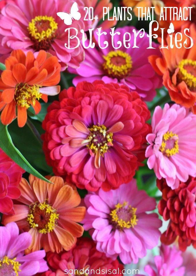 Best 25 Butterfly Garden Plants Ideas On Pinterest Butterfly Plants Plants To Attract