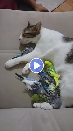 Family rest of a cat and parrots - Animated GIF