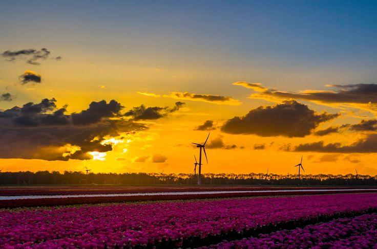 Dutch landscape IV by Watze D. de Haan
