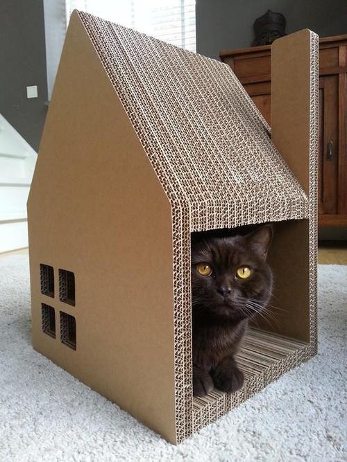 Reciclable, cálida, liviana, creativa y ecónomica es ésta caseta para gatos, que nos puede brindar, además momentos muy divertidos haciéndola en casa.