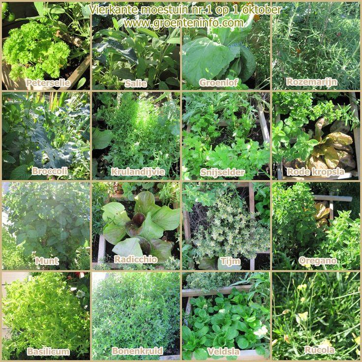 Moestuin overzicht alle artikels groenten kweken in een for Groenten tuin