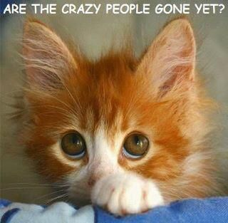 Very cute and funny kitten picture... LOL!! For more funny cat pics visit www.bestfunnyjokes4u.com/funny-cat-pics/