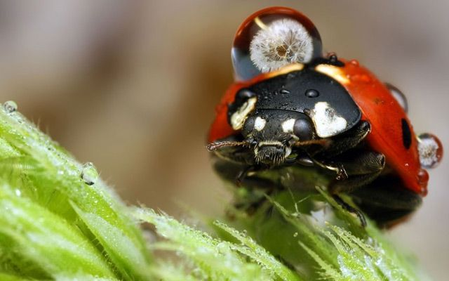 dew-soaked insects photos by Ondrej Pakan
