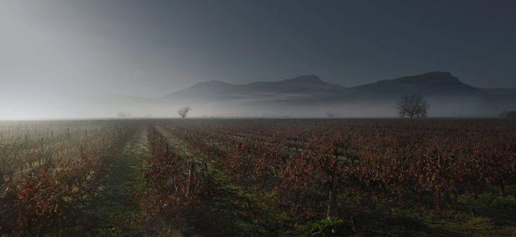 Wine project by Dimitris Poupalos