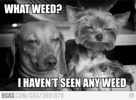 I usually don't find a lot of weed jokes funny but I couldn't help but laugh on this one.