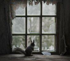 Opuszczone domy w lasach opanowane przez dzikie zwierzęta - znakomite zdjęcia Kaia Fagerstroma