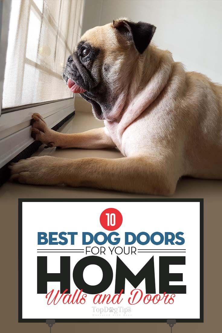 Top 10 Best Dog Doors Of 2018 For Walls Screens And Doors Top