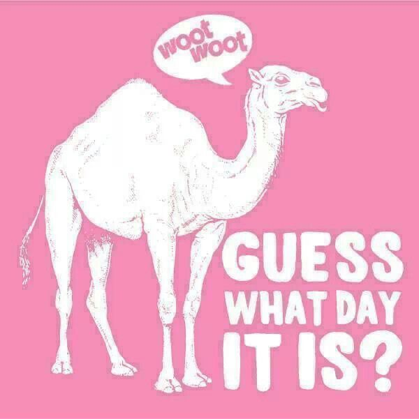 Happy Hump Day IMAGE Nation