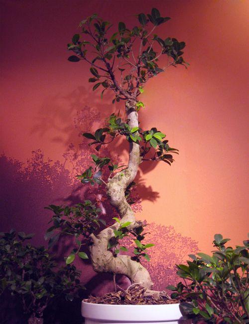 Bonsai   DecoracionDe-INTERIORES.com
