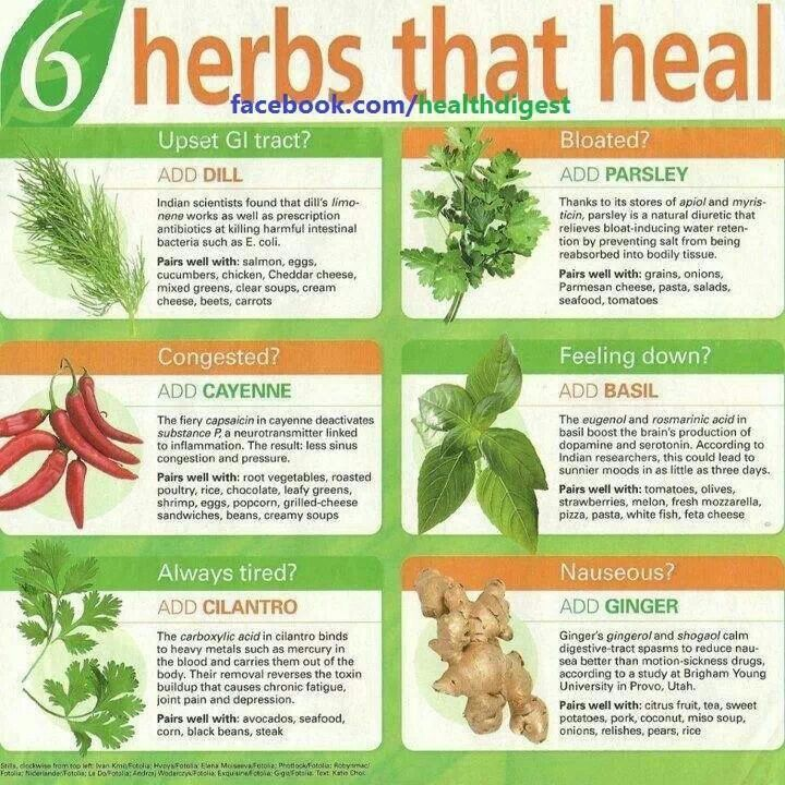Natures Remedies Heal Your Body