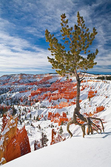 A small tree eeks out a meager existence on the edge of Bryce Canyon, Utah.