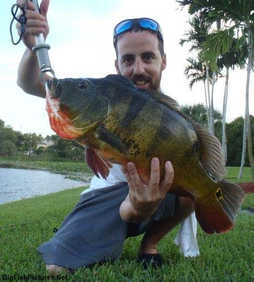 Unofficial florida state record butterfly peacock bass for Florida state fish