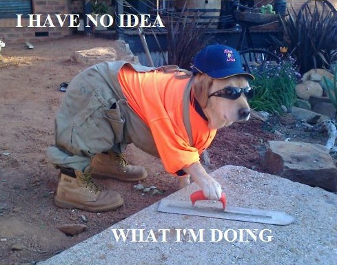I have no idea what I'm doing: Work Hard, Idea, Funny Dogs, Funny Pictures, Dogs Costumes, Pet, Funny Stuff, Funny Animal, Work Dogs