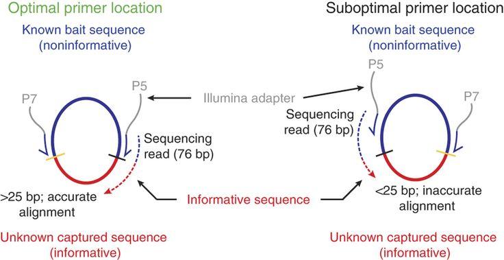 PCR Primer Design: DREB Genes