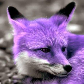 Lps Purple Fox Google Search Maddys Board Pinterest