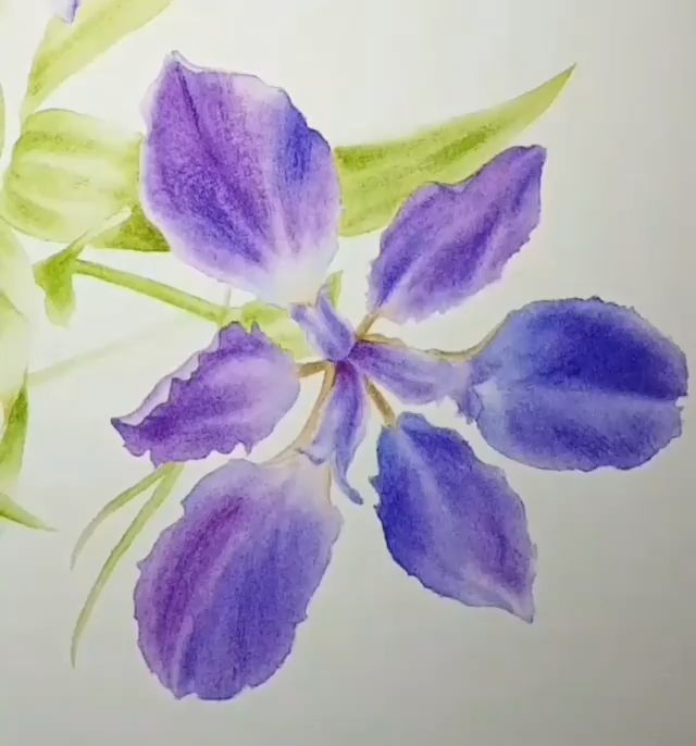 Purple Iris Watercolor Giclee Print Fine Art Home Decor 12x24