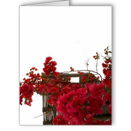 Bougainvillaea Greeting Card