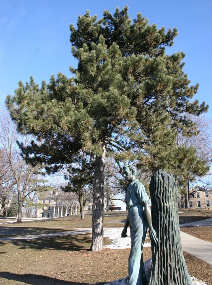 """""""Young Abe"""" statue by CA Shaler at Ripon College, Ripion, Wisconsin"""