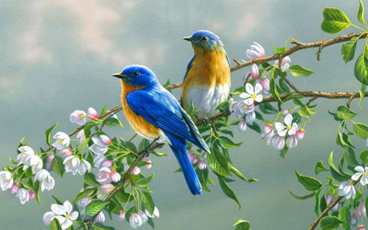 Beautiful Bluebirds..Spring♥