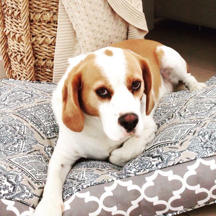 Paisley design in taupe - designer pet bed