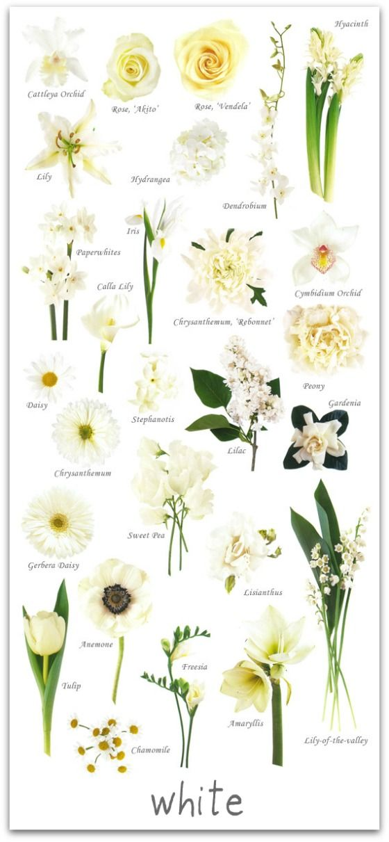 wedding flowers by colour | http://livingfresh.ca/blog/2012/04/09/wedding-flowers-by-colour/