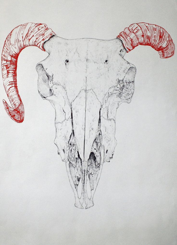 Ram's skull in Biro/ballpoint pen and fine-tipped felt-tip pen. Uploaded in a higher quality than before