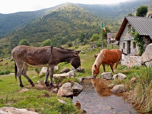 #Mountain life. Alpe Artignaga, Oasi Zegna #Italy. www.oasizegna.com