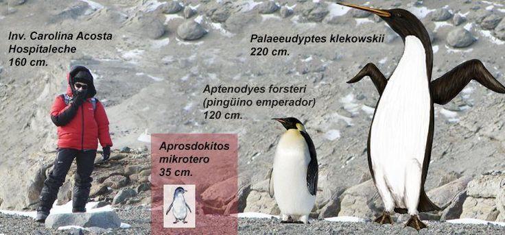 Descubren un pingüino enano de 34 millones de años de antigüedad en la Antártida (vídeo) -- Ciencia y Tecnología -- Sott.net