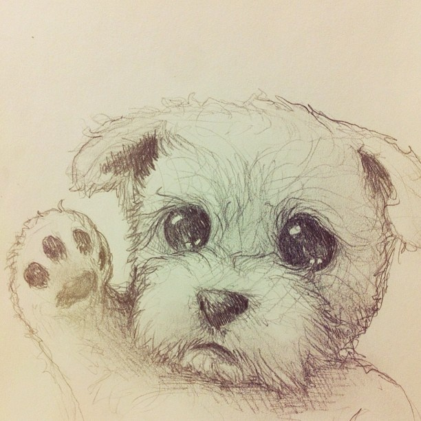 11 best images about cute animal drawings on Pinterest ...