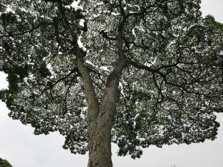 Tree of life | sofiavalentini | VSCO Grid