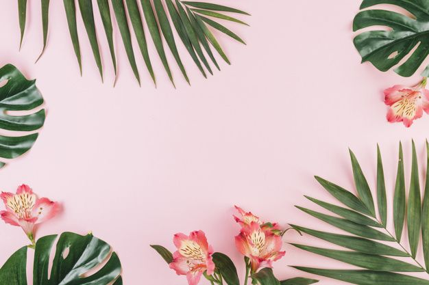 Download Border From Flowers And Palm Leaves For Free Pink Background Wallpaper Notebook Laptop Wallpaper Desktop Wallpapers