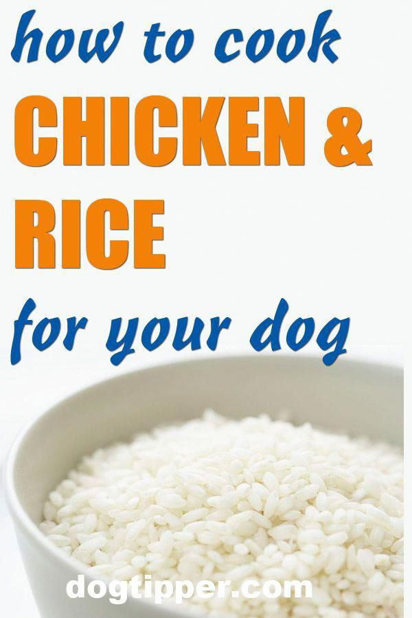 Give Your Dog Treats But Don T Overdo It Chicken And Rice