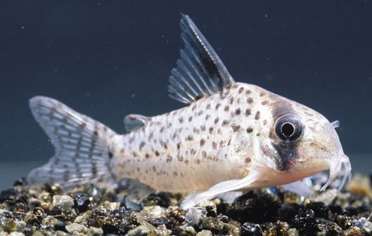 conseils Poissons d'aquarium incontournables
