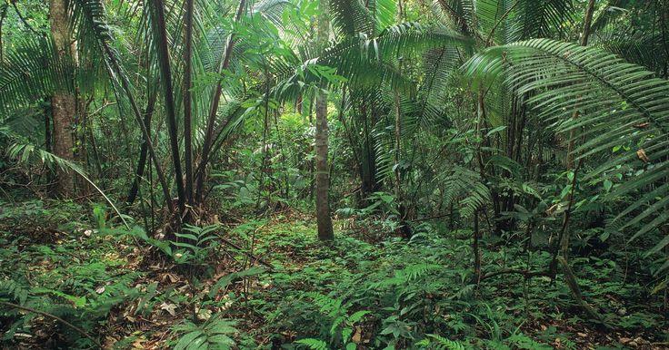 Qué tipo de plantas se encuentran en las selvas tropicales. Las selvas tropicales son los ecosistemas que contienen casi la mitad de las especies de plantas en el mundo. La combinación única de humedad y de fuertes lluvias ha dado lugar a una increíble diversidad de especies, muchas de las cuales se caracterizan por sus colores brillantes y gran tamaño.