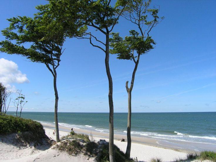 Natur pur...Ostsee, Darß