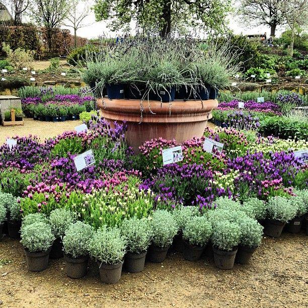 143 best Garden Center images on Pinterest | Landscaping, Vegetable ...