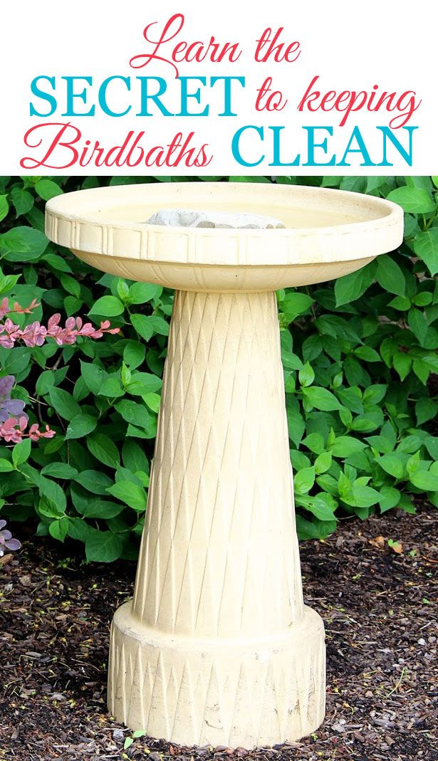 If you are tired of cleaning the nasty gunk out of your birdbath every few days, you will love this tip on how to keep your birdbath cleaner for longer.  It really works!
