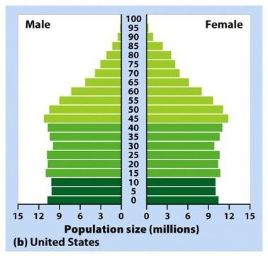 stability on pinterest : age structure diagram - findchart.co