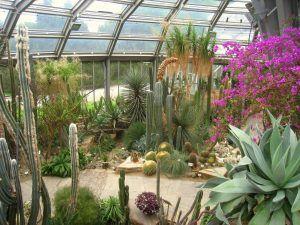 Awesome Botanischer Garten Berlino Germania Botanicalgarden botanical garden beautifulgarden
