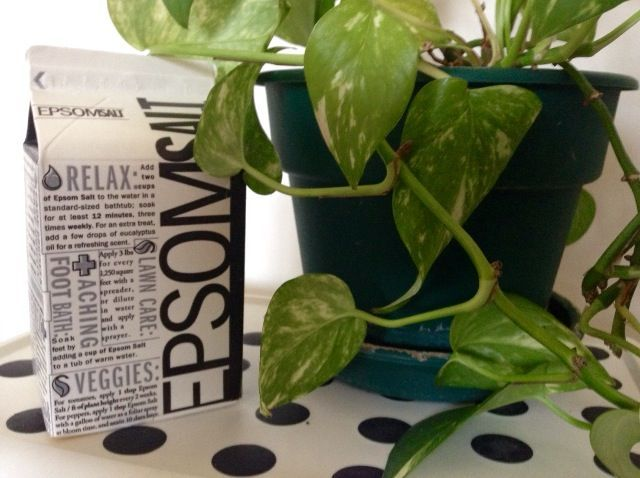 Epsom Salt Feeds The Plants With Essential Nutrients In A Natural