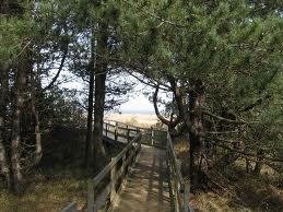 Holkham Beach - boardwalks in the pine trees