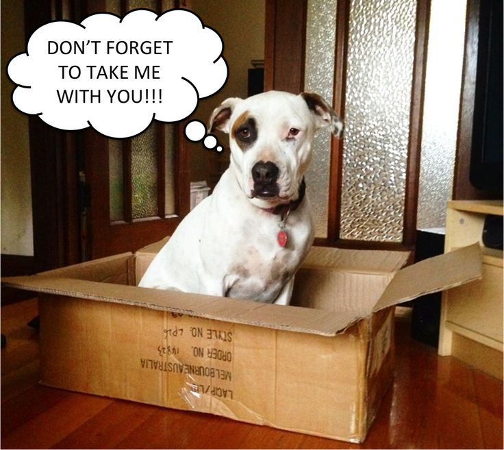 Frankie (a Pets Haven adoptee) is helping her mum and dad move house. She thought she'd remind them not to leave her behind...how cute! What funny things have your pets done to get your attention?