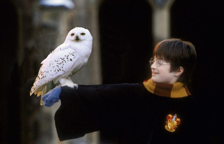 Harry Potter Penyebab Langkanya Burung Hantu di Indonesia