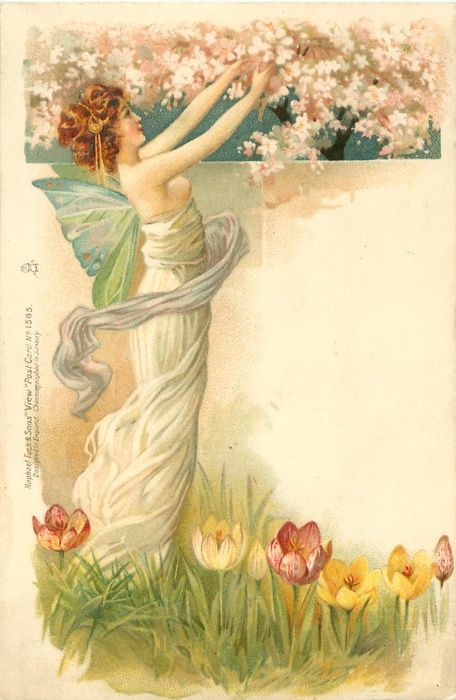 fairy in white, facing right reaching up to blossom, tulips below, 1902