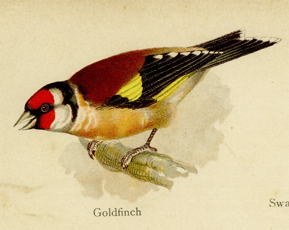 Antique Chromolithograph Goldfinch Swallow by MarcadeVintagePrints, £8.50