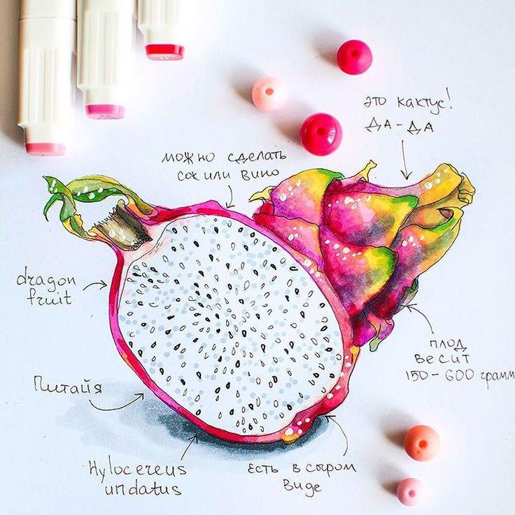 185 отметок «Нравится», 5 комментариев — Nastya Kim (@by_nastya_kim) в Instagram: «#dragonfruit #nastyakimdraw #marker #markers #illustration #scetch #art_we_inspire»