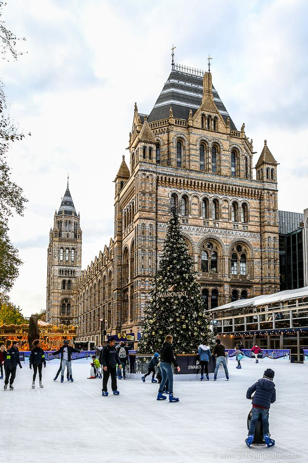 Christmas tree in the ice skating rink at the Natural History Museum in London #london #christmas #ChristmasTree #museum #naturalhistorymuseum #england #londonchristmas